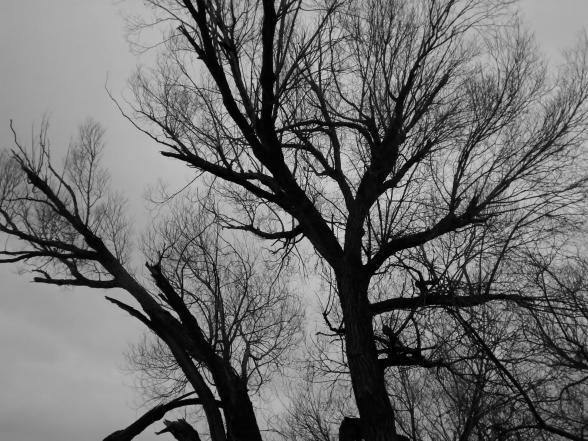 Edit Tree