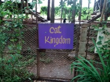 Attention cat lovers--there is a whole section of the park devoted to cats. Welcome to Cat Kingdom