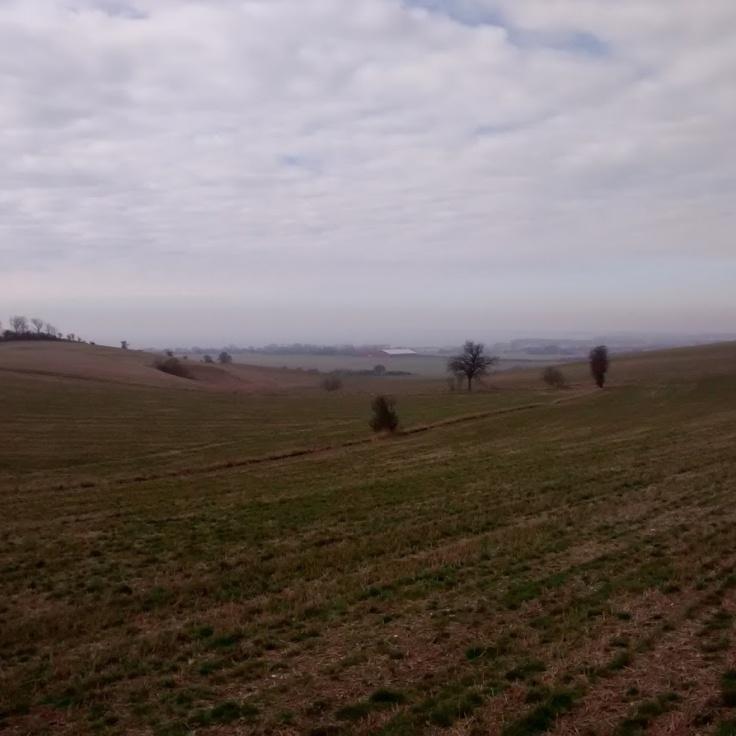 Fields for dayyys