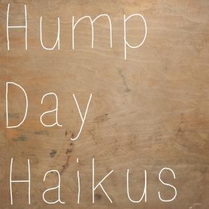 hump day haikus 3